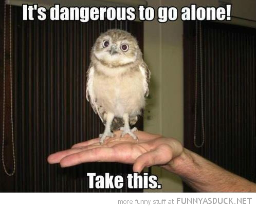 baby bird owl dangerous go alone take this zelda funny pics pictures pic picture image photo images photos lol