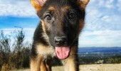 big eared dog animal okay tell me funny pics pictures pic picture image photo images photos lol