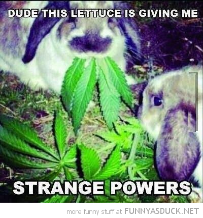 bunny rabbits animals eating marijuana weed giving me strange feelings funny pics pictures pic picture image photo images photos lol