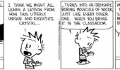 calvin hobbes comic snowflake class funny pics pictures pic picture image photo images photos lol