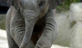 baby elephant animal can borrow suitcase only little trunk funny pics pictures pic picture image photo images photos lol