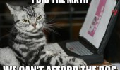 cat lolcat animal laptop computer did math can't afford dog funny pics pictures pic picture image photo images photos lol