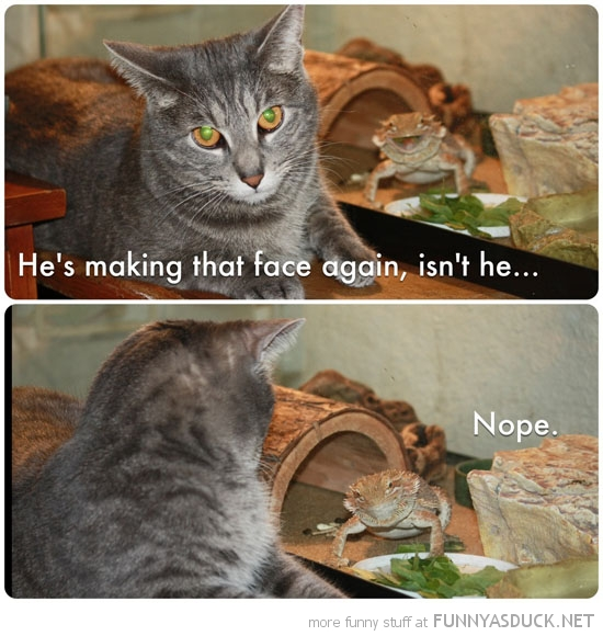 cat lolcat animal bearded dragon making face again nope funny pics pictures pic picture image photo images photos lol