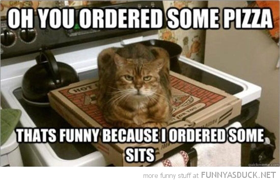 cat lolcat animal ordered pizza sitting box sits funny pics pictures pic picture image photo images photos lol