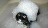 cat lolcat animal bath bubbles head hair queen of france funny pics pictures pic picture image photo images photos lol