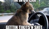 cat lolcat animal driving car getting tickets and shit funny pics pictures pic picture image photo images photos lol