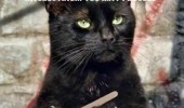 cat lolcat animal filing nails claws interesting proceed funny pics pictures pic picture image photo images photos lol