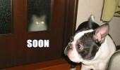 cat lolcat animal glowing eyes door window dog soon funny pics pictures pic picture image photo images photos lol