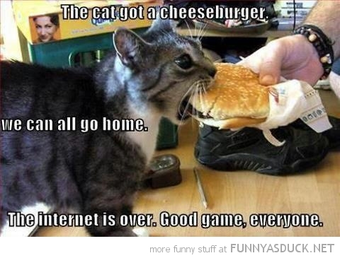 cat got cheeseburger internet over lolcat animal eating funny pics pictures pic picture image photo images photos lol