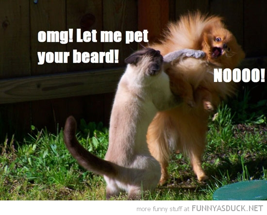 Cat Lolcat Animal Hitting Dog Let Stroke Beard Funny Pics