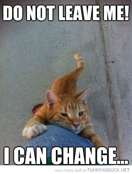 cat lolcat animal holding trouser leg do not leave me can change funny pics pictures pic picture image photo images photos lol