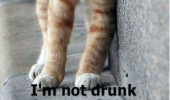 cat lolcat animal lying road not drunk fuck funny pics pictures pic picture image photo images photos lol