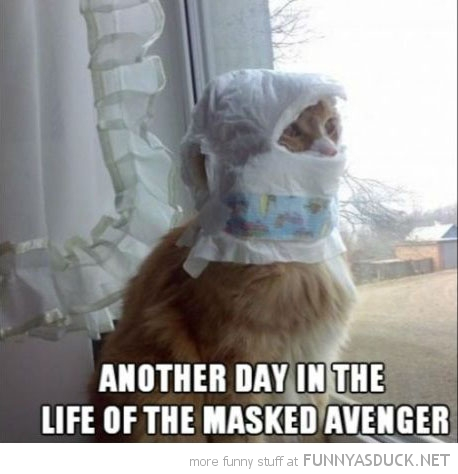 cat nappy lolcat animal diaper head another day life masked avenger funny pics pictures pic picture image photo images photos lol