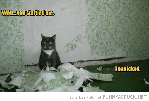 cat lolcat animal ripped wallpaper you startled me i panicked funny pics pictures pic picture image photo images photos lol