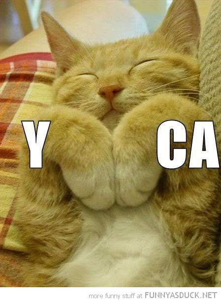 cat animal lolcat sleeping paws ymca funny pics pictures pic picture image photo images photos lol