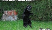cat lolcat animal standing then bear came like this funny pics pictures pic picture image photo images photos lol