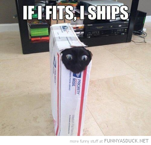 cat stuck box fits ships lolcat animal funny pics pictures pic picture image photo images photos lol