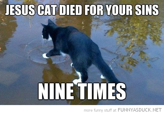 cat walking water animal lolcat jesus died for sins nine times funny pics pictures pic picture image photo images photos lol