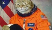 cat lolcat animal castronaut space funny pics pictures pic picture image photo images photos lol