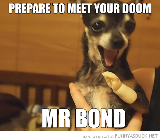 chiuaua dog animal tiny hand prepare meet doom mr bond funny pics pictures pic picture image photo images photos lol