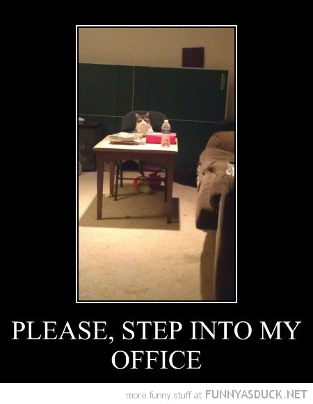 step into my office cat lolcat animal sitting desk  funny pics pictures pic picture image photo images photos lol