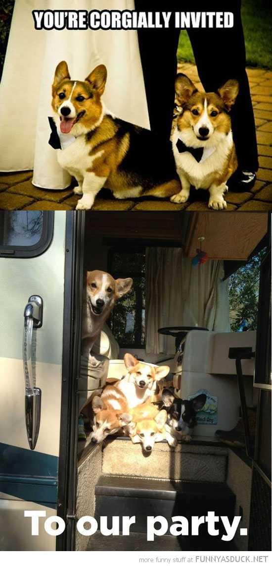 corgi dogs animal you're corgially invited to our party funny pics pictures pic picture image photo images photos lol