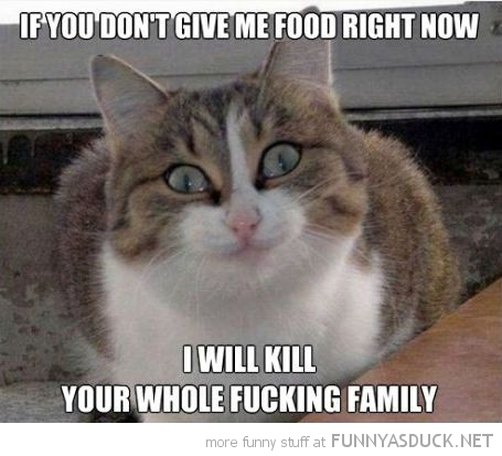 crazy cat lolcat animal feed me or kill whole family funny pics pictures pic picture image photo images photos lol