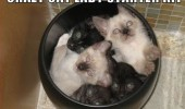 crazy cat lady starter pack animals lolcats kittens bin funny pics pictures pic picture image photo images photos lol