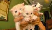 cute bunch kittens cats lolcats animal dangerous go alone take this zelda gaming funny pics pictures pic picture image photo images photos lol