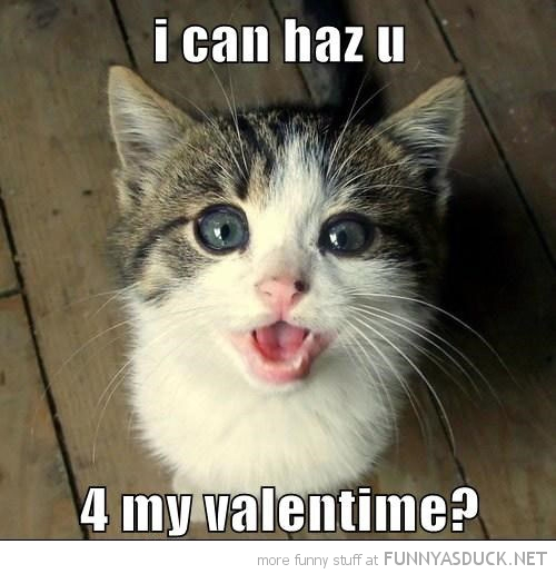 cute cat kitten lolcat animal can have you my valentines funny pics pictures pic picture image photo images photos lol