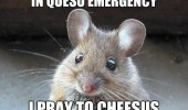 cute mouse animal queso emergency pray cheesus funny pics pictures pic picture image photo images photos lol