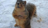 cute squirrel animal excuse me feeder empty snow funny pics pictures pic picture image photo images photos lol