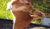 dancing cat lolcat animal invisible tango partner funny pics pictures pic picture image photo images photos lol