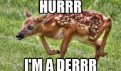 deer animal weird legs bent foal hurrr i'm derrr funny pics pictures pic picture image photo images photos lol