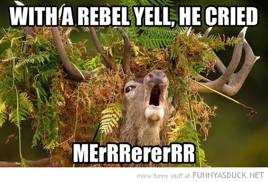 deer animal grass head antlers rebel yell funny pics pictures pic picture image photo images photos lol