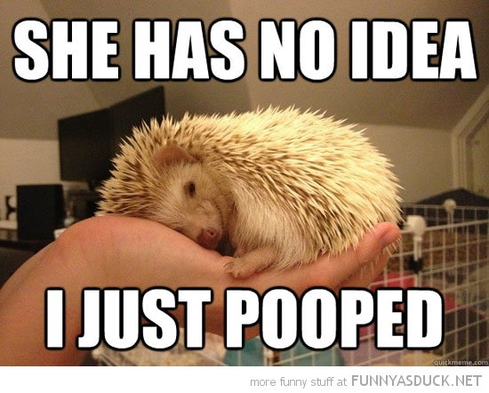devious hedgehog animal hand no idea just pooped funny pics pictures pic picture image photo images photos lol