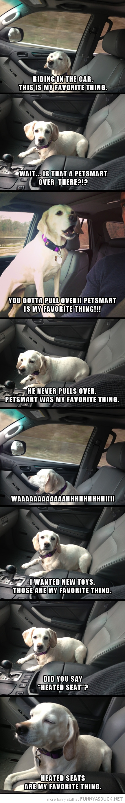 dog animal car petsmart heated seats favourite thing  funny pics pictures pic picture image photo images photos lol