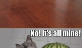dog cat animal can i have some water melon no all mine funny pics pictures pic picture image photo images photos lol