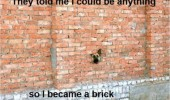 dog animal head through hole wall said be anything brick funny pics pictures pic picture image photo images photos lol