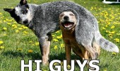 dog animal head under body happy hi guys funny pics pictures pic picture image photo images photos lol