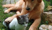 dog hugging cat lolcat animal don't stop retrievin hold on that feline glee funny pics pictures pic picture image photo images photos lol