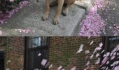 dog animal love spring flower smells abort funny pics pictures pic picture image photo images photos lol