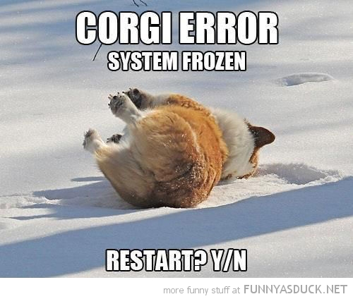 dog animal lying snow corgi error restart y n funny pics pictures pic picture image photo images photos lol