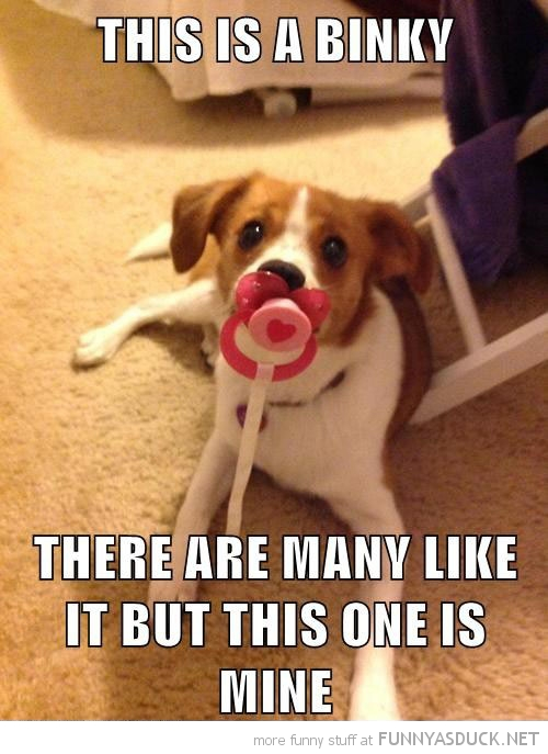 dog pacifier dummy mouth binky mine many like it funny pics pictures pic picture image photo images photos lol