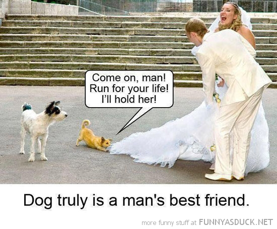 dog animal pulling brides dress run man truly best friend funny pics pictures pic picture image photo images photos lol