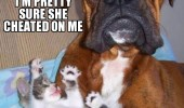dog animal kitten sad pretty sure she cheated on me funny pics pictures pic picture image photo images photos lol