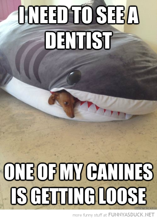 dog shark sleeping bag animal need see dentist canine loose funny pics pictures pic picture image photo images photos lol