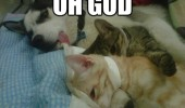 dog animal sleeping cats oh god how much drink last night funny pics pictures pic picture image photo images photos lol