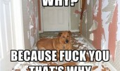 dog animal wreaked hall ripped wallpaper why fuck you funny pics pictures pic picture image photo images photos lol