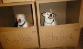dogs animals boxes kissing biting booth funny pics pictures pic picture image photo images photos lol